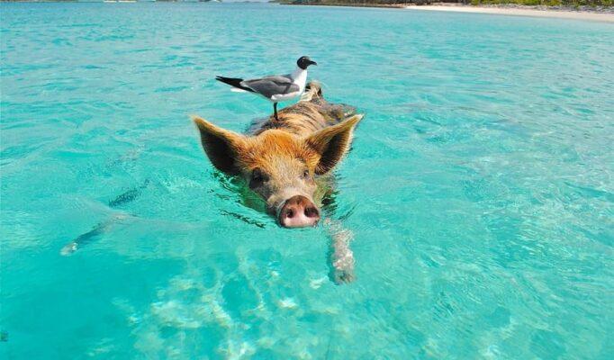 sea-nature-ocean-animal-seagull-vacation-1020584-pxhere.com